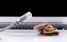 Quiz: que animal é a sua conexão de banda larga fixa?